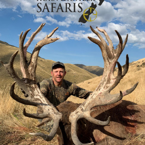 2019 New Zealand Red Stag 441 to 480SCI