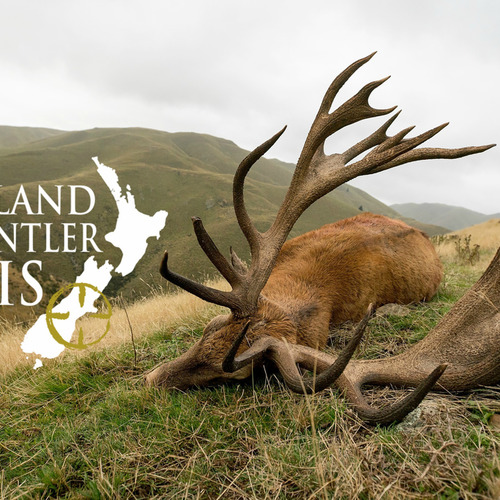 Club New Zealand Red Stag 422 sci