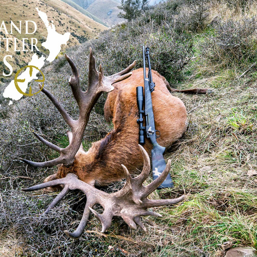Club New Zealand Red Stag 392 sci
