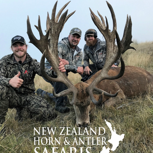 Club New Zealand Red Stag 467 sci