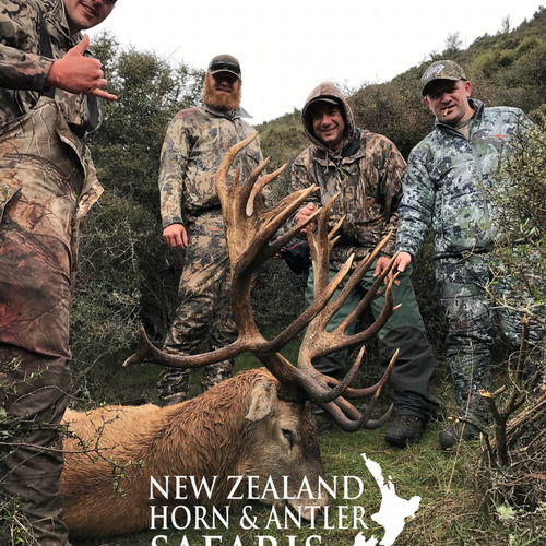 Club New Zealand Red Stag 438 sci