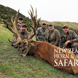 Club New Zealand Red Stag 409 sci