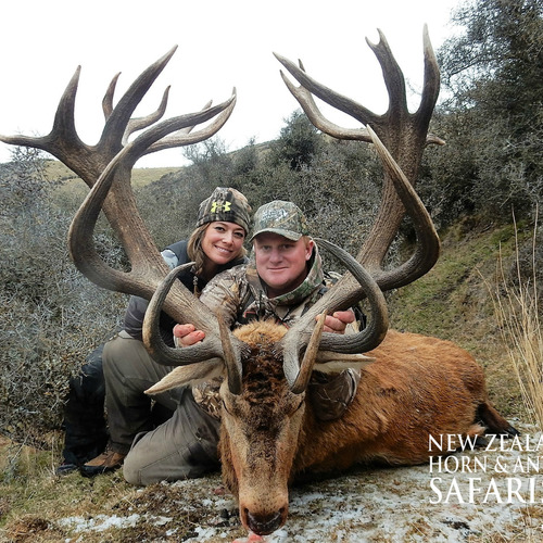 Club New Zealand Red Stag 399 sci