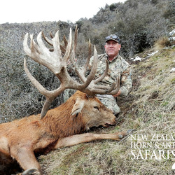 Club New Zealand Red Stag 411 sci