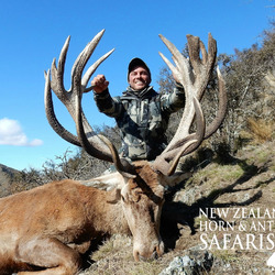 Club New Zealand Red Stag 397 sci