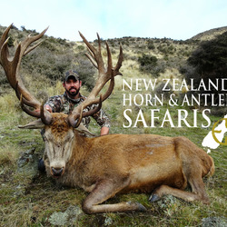 NZ Red Stag 320 - 360