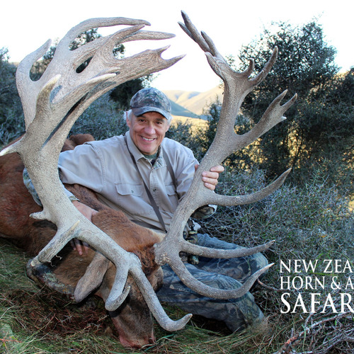 Early Season Club NZ Red Stag 423sci