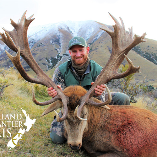Late Season Club NZ Red Stag 390sci
