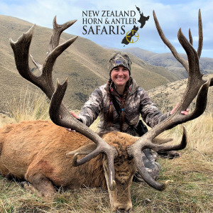 2019 New Zealand Red Stag 340 to 379sci